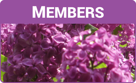 International Lilac Society